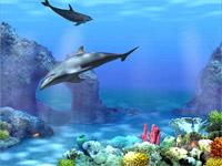 dolfijnen 3d