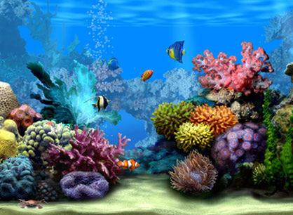 aquarium met tropische vissen